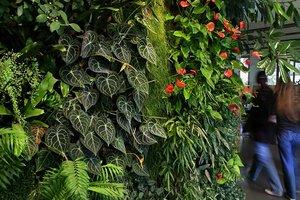 fondation nicolas hulot boulogne billancourt vertical garden patrick blanc. Black Bedroom Furniture Sets. Home Design Ideas