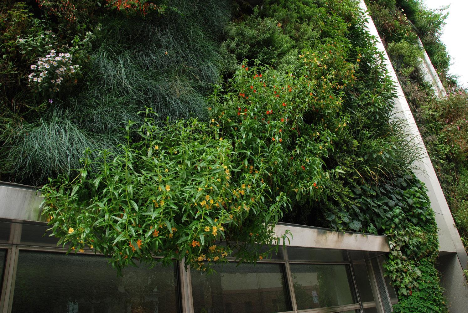 Drew School San Francisco Vertical Garden Patrick Blanc