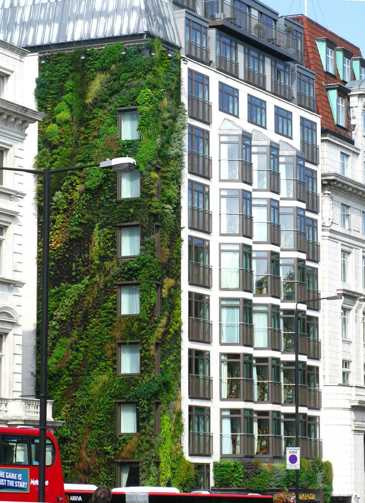 Athenaeum Hotel, London   Vertical Garden Patrick Blanc