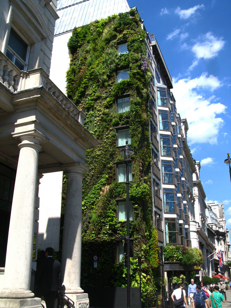 athenaeum hotel london vertical garden patrick blanc. Black Bedroom Furniture Sets. Home Design Ideas
