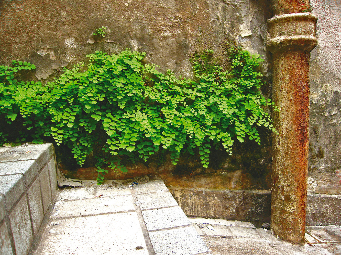 Plants Buildings And Towns Vertical Garden Patrick Blanc