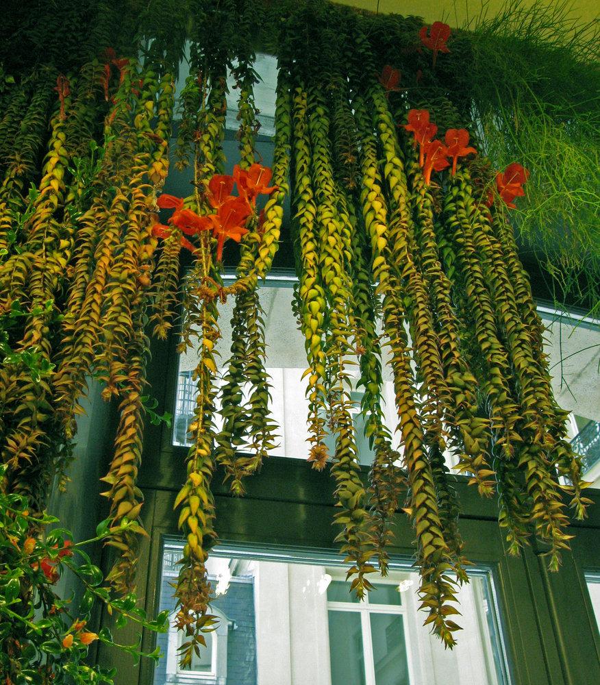 Club Med Paris Vertical Garden Patrick Blanc