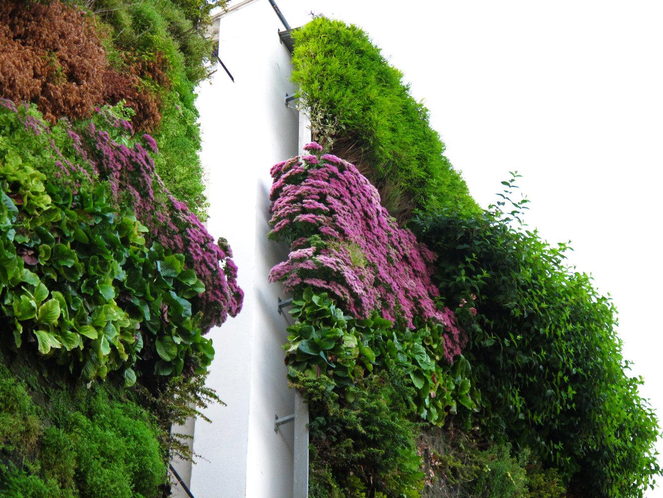 Rue D 39 Alsace Paris Vertical Garden Patrick Blanc