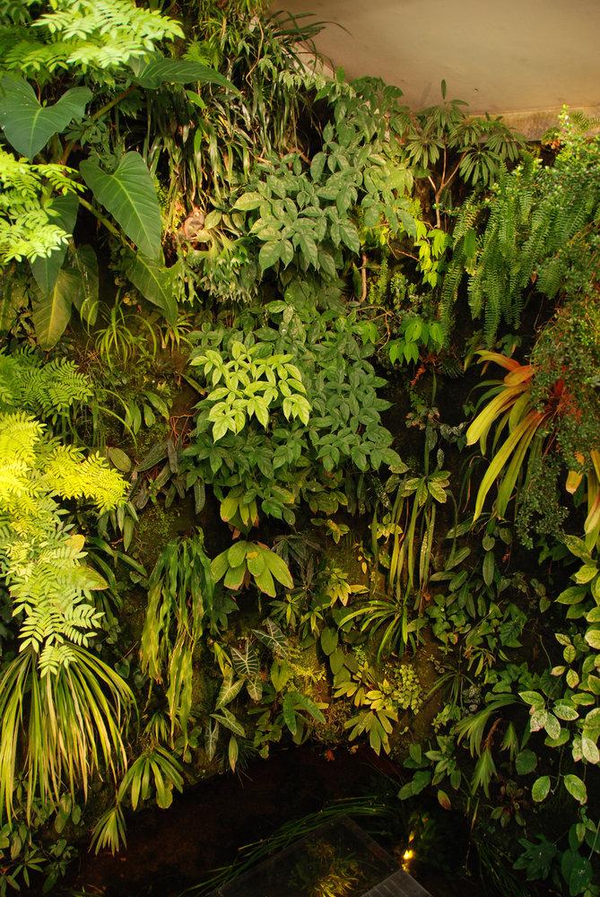 Maison de patrick blanc mur vegetal patrick blanc - Mur vegetal patrick blanc ...