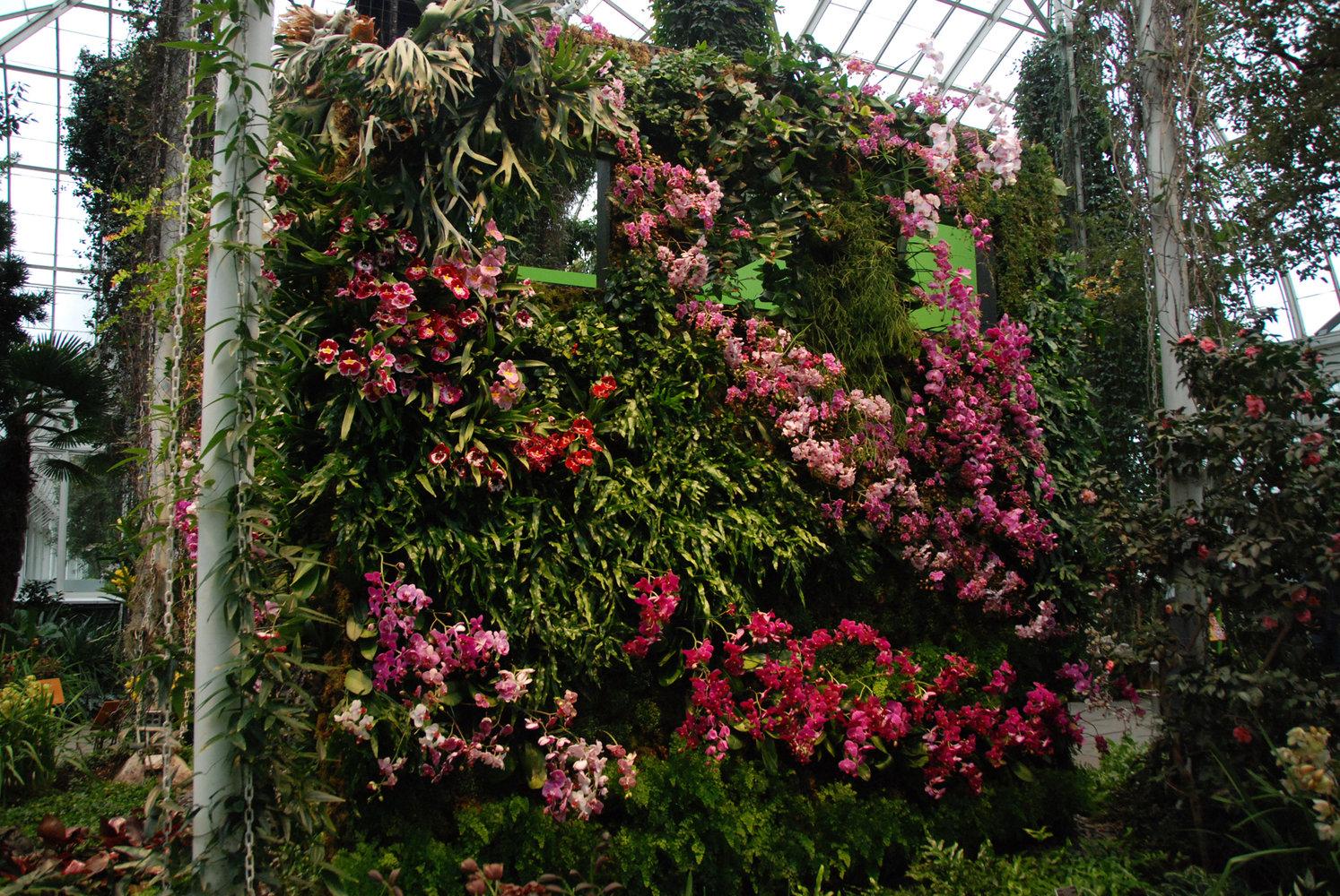 new york botanical garden orchid expo 2012 mur vegetal. Black Bedroom Furniture Sets. Home Design Ideas