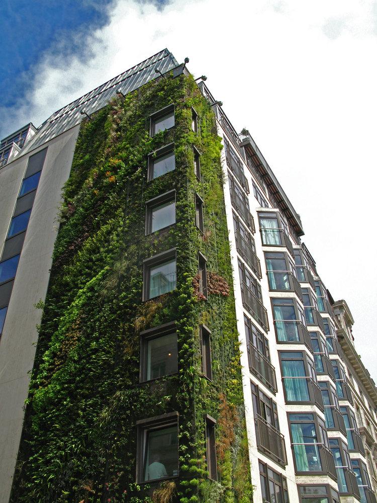 athenaeum hotel london vertical garden patrick blanc. Black Bedroom Furniture Sets. Home Design Ideas