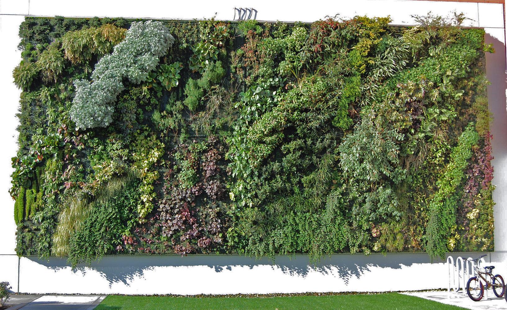 Tacoma Goodwill Vertical Garden Patrick Blanc
