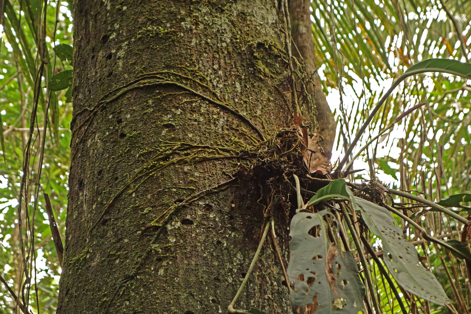 Vanda epiphytic roots (orchids) - Four Thirds User photo gallery
