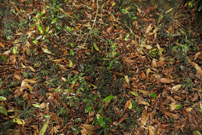 Forest Understory 2 | Page 2 | Vertical Garden Patrick Blanc