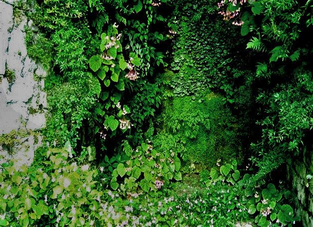 Caverne v g tale la roche guyon mur vegetal patrick blanc - Patrick blanc mur vegetal ...
