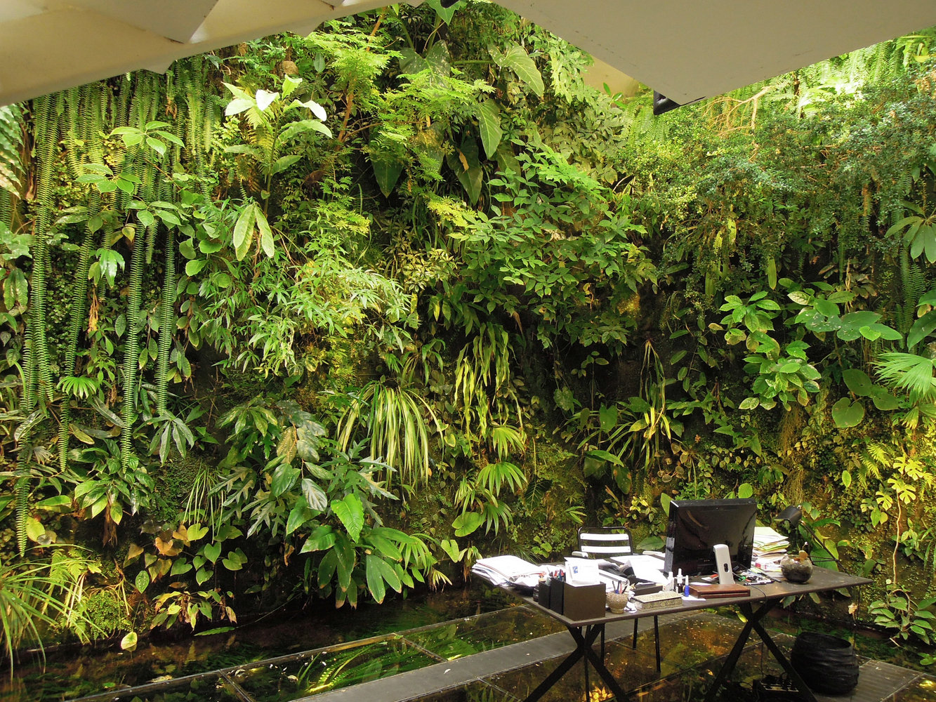 Indoor Vertical Garden In Patrick Blanc Home After Four Years Of Growth