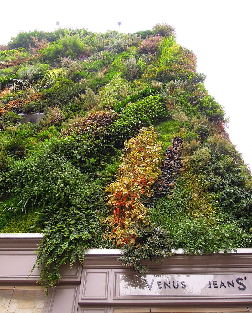 L 39 Oasis D 39 Aboukir Paris Vertical Garden Patrick Blanc