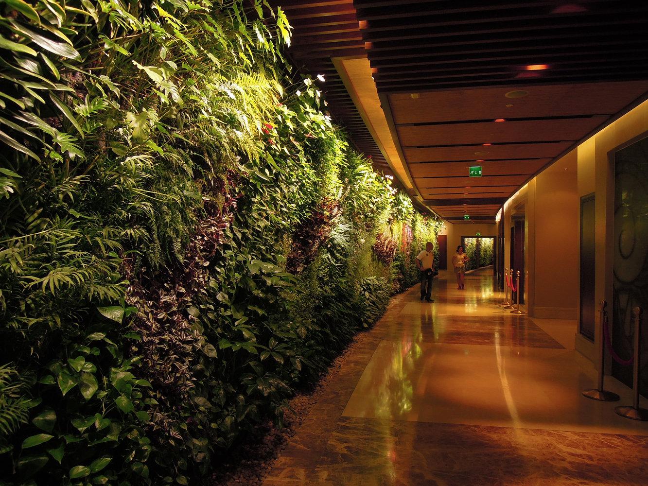 Sofitel palm jumeirah dubai vertical garden patrick blanc vertical garden in the corridor sofitel palm jumeirah dubai sciox Image collections